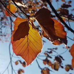 pcleavesisee leavesisee