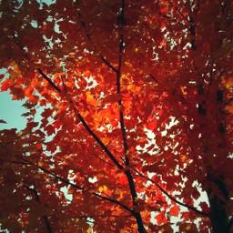 leaves pcleavesisee leavesisee fall autumn freetoedit