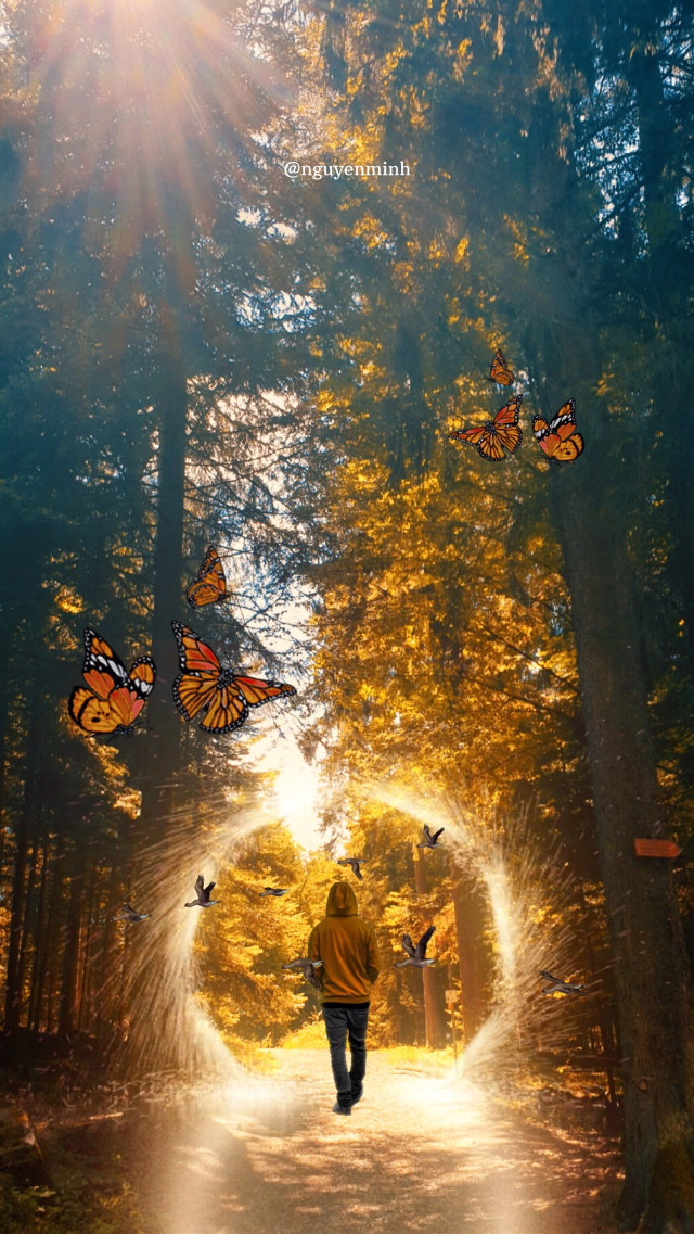 #autumn #august #weather #tree #walk #september11 #shine #butterfly #freetoedit #forrest