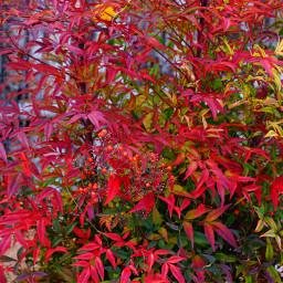 leaves pcleavesisee leavesisee