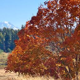 tree mtrainier pcleavesisee leavesisee freetoedit