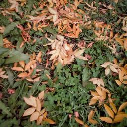 photography myphoto autumn autumnleaves freetoedit