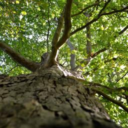 freetoedit kinora tree leavesfall lookingup