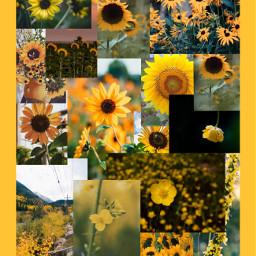 flower yellow yellowaesthetic flowermoodboard yellowflower freetoedit