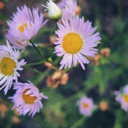 flower flowers fiore summer phonephotography