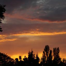 freetoedit sunset tree silhouette photography nature