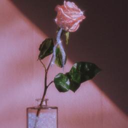 freetoedit picsart heypicsart glitter rose