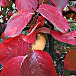 myphoyo autunno foglie pcleavesisee leavesisee