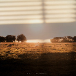 photography myphoto shadoweffect sunset beauty nature trees birds art edit madewithpicsart heypicsart interesting goldenhour like love follow