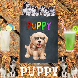 puppylove puppy freetoedit fanart kpopfanart army voteforme voteifyoulike puppylover challengeaccepted challenge challengedit winner top1 ircchalkboarddesign chalkboarddesign
