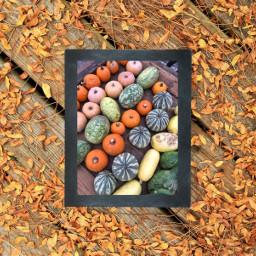 autumn ircchalkboarddesign chalkboarddesign freetoedit