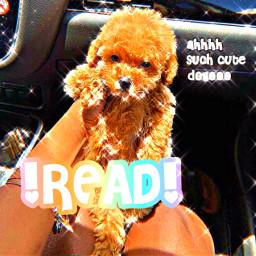 dog read imback bepatient