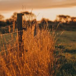 goldenhour sunset summer goldenhourlight orange summervibes pcgoldenhour