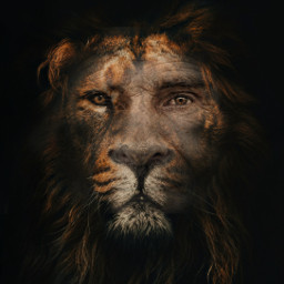 freetoedit heypicsart portrait lion humananimalhybrid