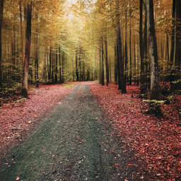 autumn forest autumnvibes fall trees leafs road forestroad myphoto myedit myart blureffect artistic madewithpicsart joannart becreative heypicsart picsartmaster freetoedit