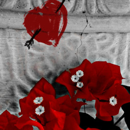 bougainvillea flowers plant love arrow heart graffiti colorsplash blackandwhite popofred red musiclove myphotography