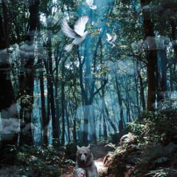 imagination fiction girl forest remixed freetoedit