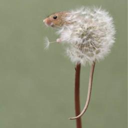 mouse nature showoffyourhomescreen