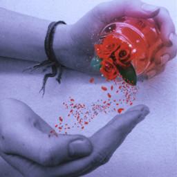 picsart heypicsart surreal magic rose surrealism redrose jar jarremix plrd blackandwhite magical petals rosepetals freetoedit