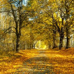 freetoedit autumn road nature