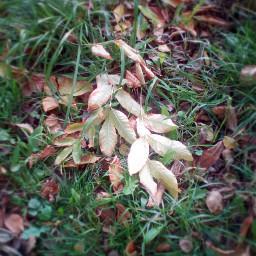 freetoedit myphoto autumn autumnleaves