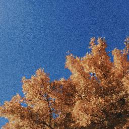 freetoedit yellow amarillo tree arbol autumn otoño sky bluesky retro cielo cieloazul photography photograph blue azul celeste simple mine