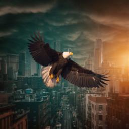 eagle city clouds storm freetoedit unsplash