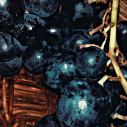 myphoto photography photographer photograph photoedit photobyme newclick photooftheday photo background hd fruit fall autumn purple grapes love freetoedit