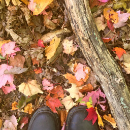 autumn fall leaves boots autumnvibes freetoedit