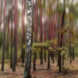 autumn autumnvibes fall forest fallcolors woodland beautifulday trees birchtree leafs beautifulnature myphoto blureffect freetoedit