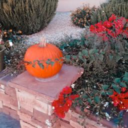 autumn pumkin garden bougainvilleas earthycolors