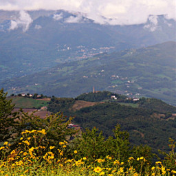 freetoedit myphotography landscape nature mountains woods fields cloudysky flowers yellowflower