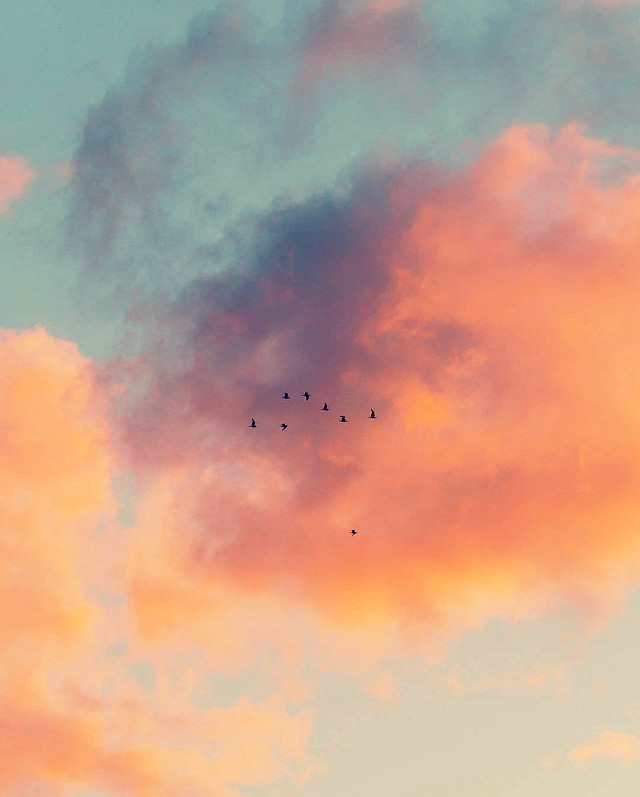 #nature #skylover #morningsky #beautifulsunriselight #skyandclouds #birdsinflight #silhouettes #naturephotography                                                                               #freetoedit