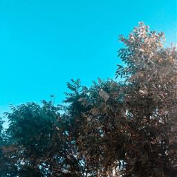 trees leaves sky blue september2020 myphotography
