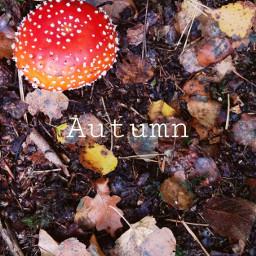 freetoedit autumn autumnleaves autumnvibes autumncolors