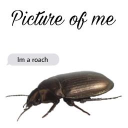 ugly roach freetoedit