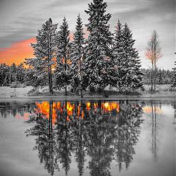 tree night day zoke black&whitenature
