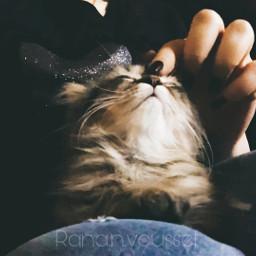 catsofpicsart love remixed