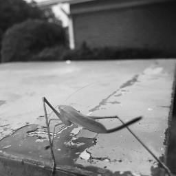freetoedit nature outside grasshopper blackandwhite pcblack&whitenature black&whitenature