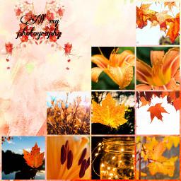 orangeaesthic interesting photography art fall orange followme nature beautiful ccorangeaesthetic orangeaesthetic freetoedit