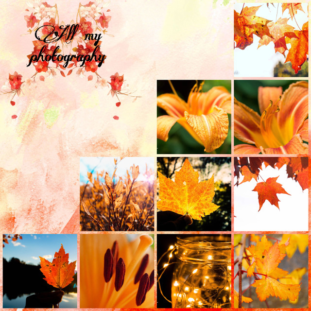 Decided to join this challenge using all my own photos. I've always liked the fall 😏 #orangeaesthic #interesting #photography #art #fall #orange #followme #nature #beautiful