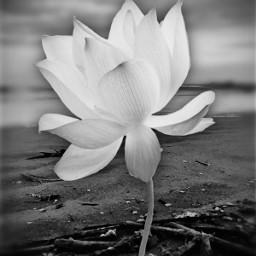 flower beach photoshoped