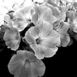 pcblack&whitenature black&whitenature