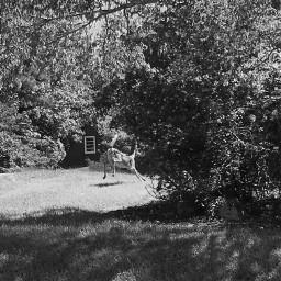 freetoedit tailsup deer run nature lucky pcblack&whitenature black&whitenature