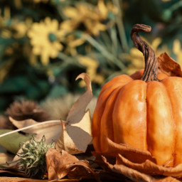 october autumn orange pumpkin freetoedit