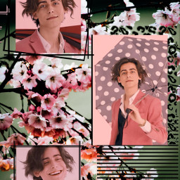 umbrella umbrellaacademy aiden fifth fifty umbrellacademy photosession pink sakura aesthetic music aidangallagher gallagher aidangallagheredit freetoedit