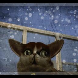 spleensthecat cat spleens sims sims4 sims4cat sims4catsanddogs kitty kittycat calico secondedit editforfun random randomedit fun freetoedit