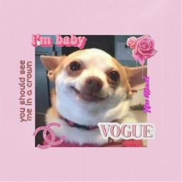 freetoedit funny dog funnydog verycute cute doglove doglife pink pinkaesthetic aesthetic