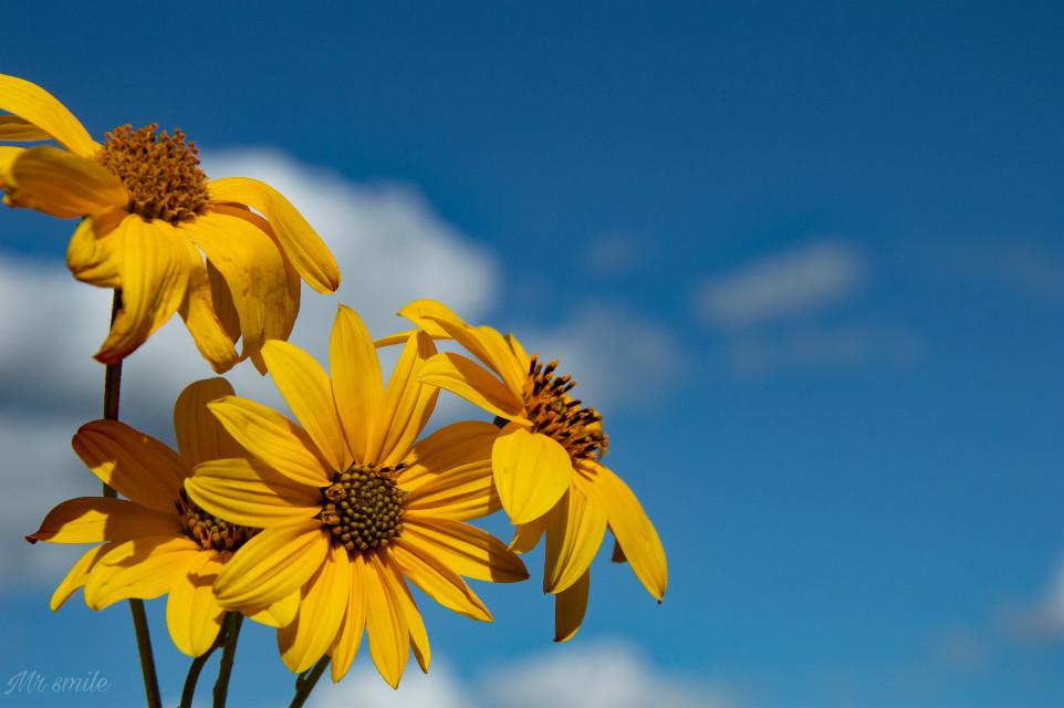 HAPPY WEEKEND FRIENDS😀🖐️👍#photography #yellow #flowershoutout #blue