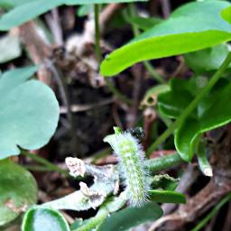 myphoyo foglie baco closeup